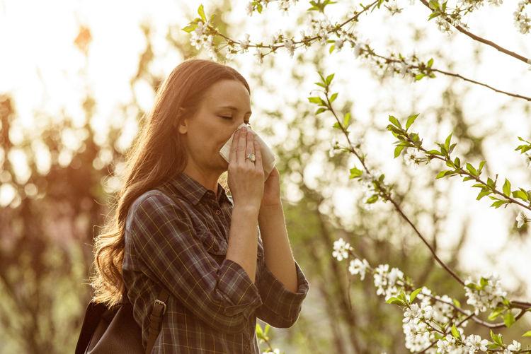 CBD Tropfen gegen Allergie